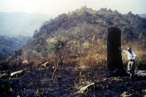 Damaged forest at Doi Suthep-Pui National Park, Thailand, awaiting restoration. Image: Forru @ English Wikipedia via Wilimedia Commons