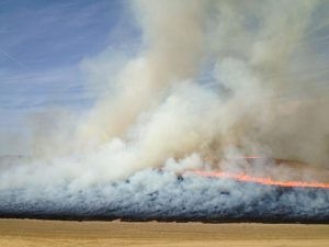 Smoke plume from the burning of wheat residue north of Walla Walla, Washington. The field was burned using a backfire. The light color of the smoke plume indicates low soot content (photo by Emily Lincoln).