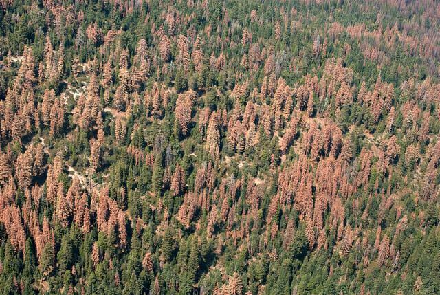 Drought kills 102 million trees in California, says report