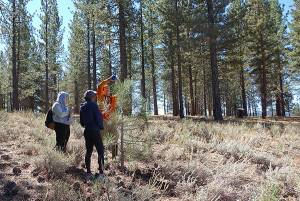 Citizen scientists, volunteers with the Earthwatch Institute, conduct tree surveys near Truckee, Calif. as part of meadow and carbon research conducted by the University of Nevada, Reno's Soil Science Laboratory directed by Ben Sullivan in the College of Agriculture, Biotechnology and Natural Resources. Photo courtesy of the University of Nevada, Reno.
