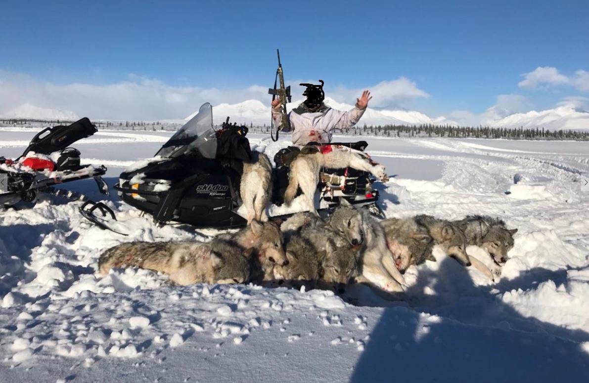 2be513fef36 Assault Rifle Slaughter of Denali Wolves