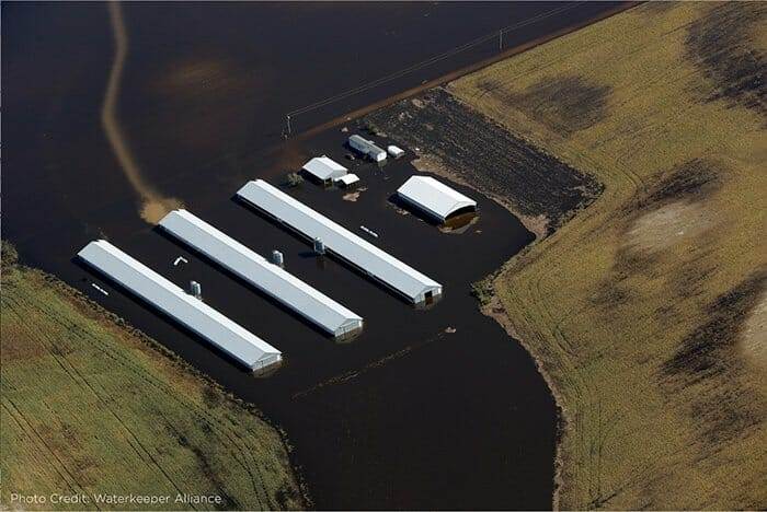 Will Hurricane Florence Flood NC Factory Farms And