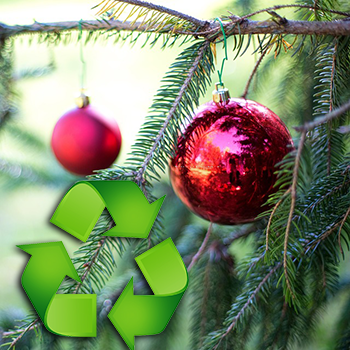 Christmas Tree Recycle.Recycle Your Christmas Tree For Free Yubanet